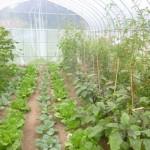 元気村農場